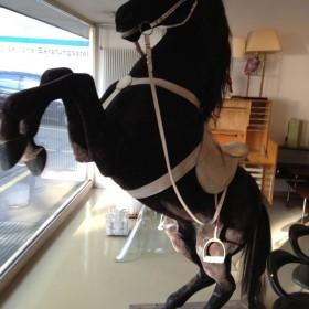 Lebensgrosses Pferd aus Cabaret